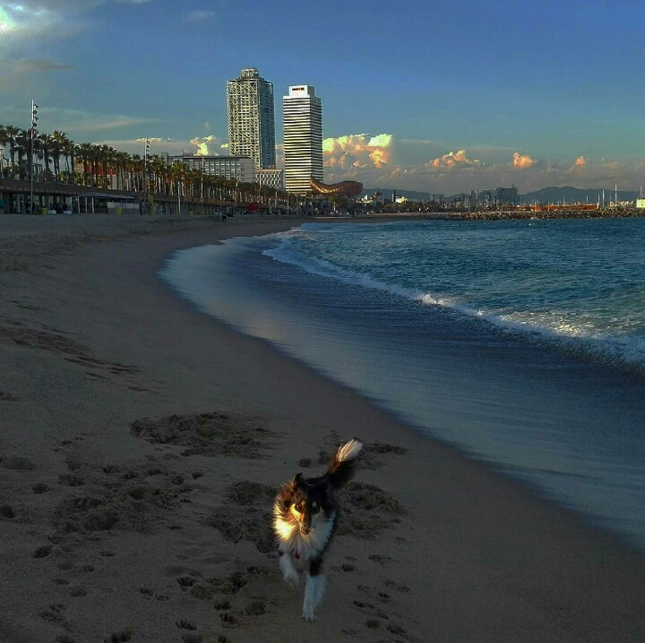 beach, architecture, sand, building exterior, sea, skyscraper, built structure, city, sky, outdoors, real people, water, one animal, cloud - sky, nature, travel destinations, sunset, animal themes, cityscape, dog, urban skyline, domestic animals, pets, vacations, mammal, day