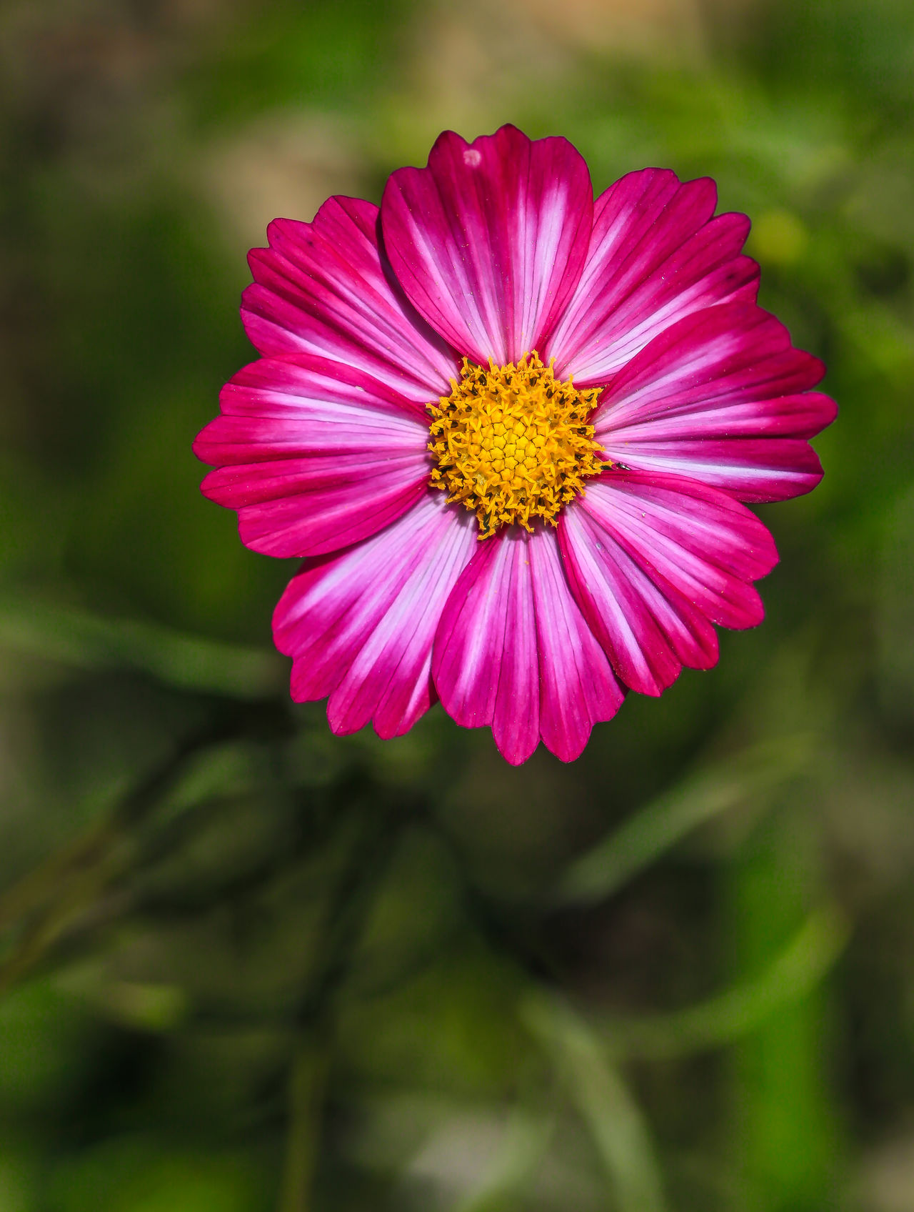 Off season, farmer feed the field by plant wildflowers Beauty In Nature Blooming Butterfly Flower Close-up Day Flower Flower Head Flowers Field Focus On Foreground Fragility Freshness Growth Nature No People Off Season Outdoors Petal Pink Color Pollen Taiwan Wildflowers Winter Zinnia