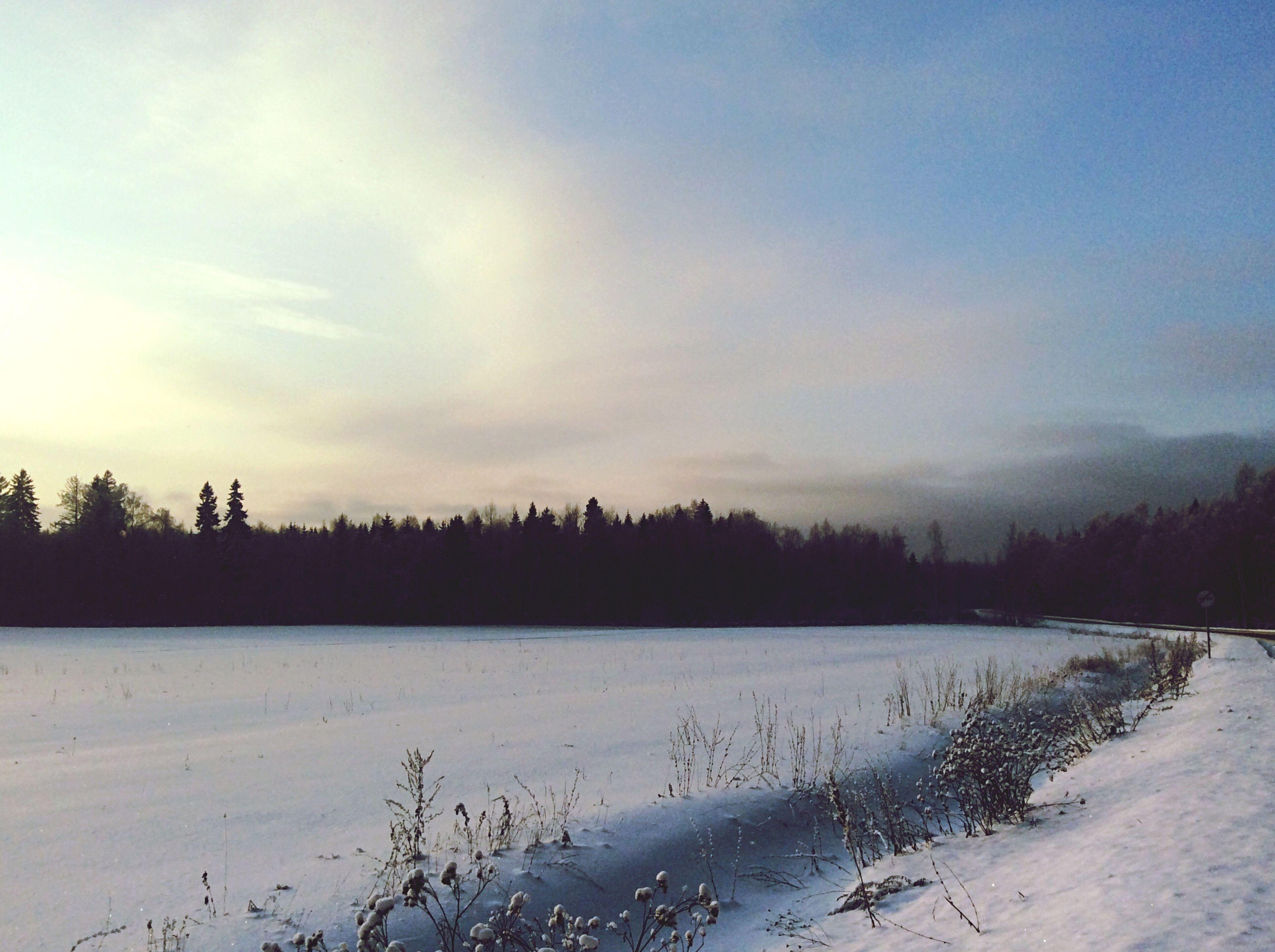 snow, winter, cold temperature, tranquil scene, tranquility, season, tree, weather, scenics, beauty in nature, landscape, sky, nature, covering, field, frozen, non-urban scene, bare tree, sunset, cloud - sky