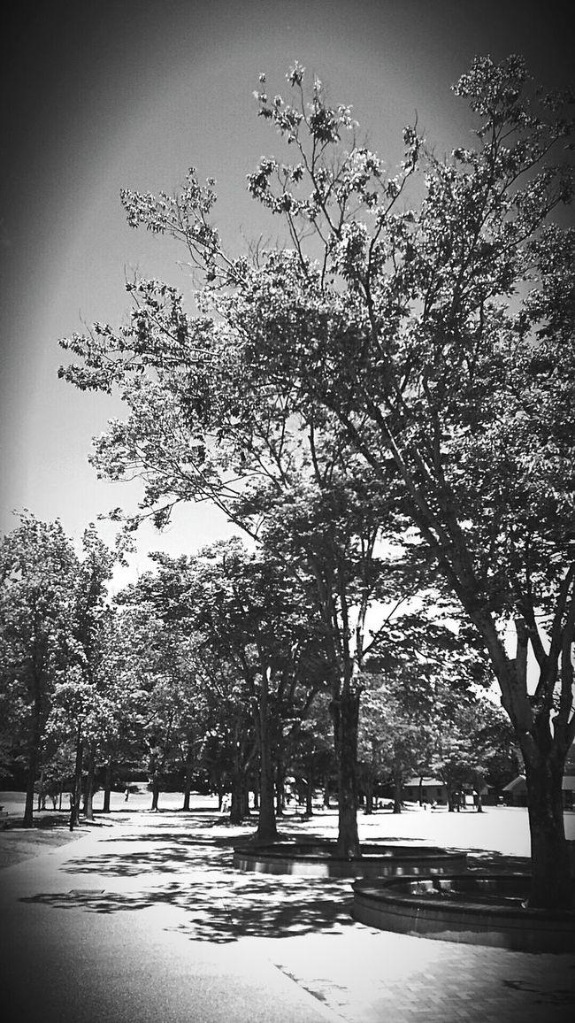 [15.06.04] 休。 No People 子供の楽園 Japanese  Kyoto Monochrome Japan Park Enjoying Life Black & White Black And White Creative Light And Shadow Tree Sky Beauty Nature Cloud And Sky