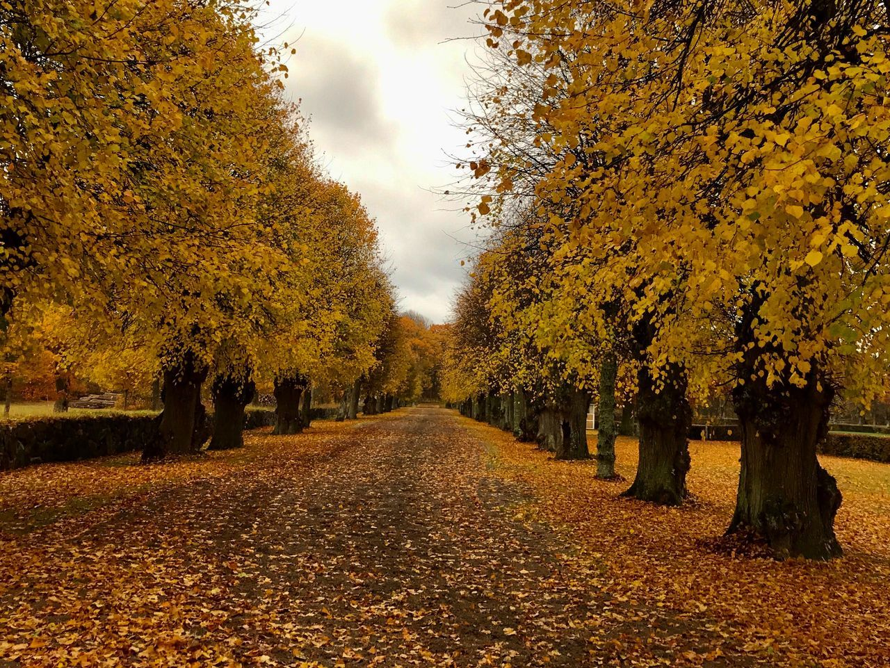 autumn, change, tree, leaf, nature, beauty in nature, yellow, scenics, orange color, tranquility, the way forward, tranquil scene, outdoors, no people, day, landscape, maple, sky