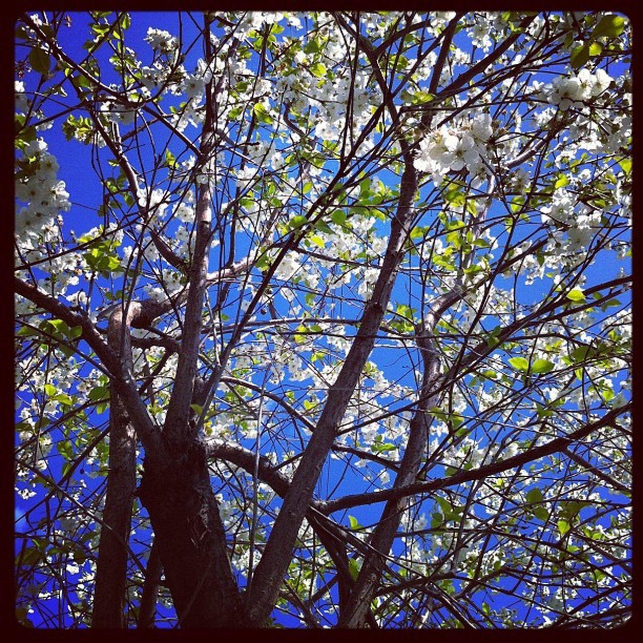 Spring Street Spring Genova Instaily iphonephoto art flowers season