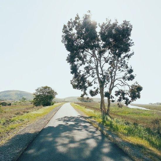 Afternoon shadows. VSCO Vscocam Fremont Ebrpd california hiking coyotehillsregionalpark
