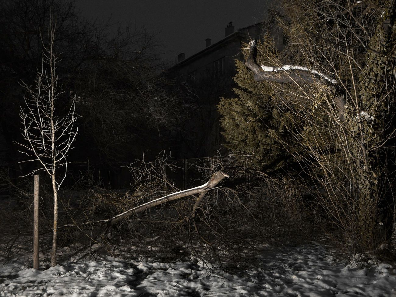 It's Cold Outside Winter Wintertime Snow Broken Brench Depression Flash City Urban Landscape Night Horror Trees TreePorn