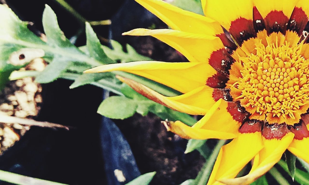 flower, fragility, freshness, petal, yellow, flower head, close-up, beauty in nature, no people, nature, pollen, outdoors, day, growth, leaf, plant, blooming, sunflower