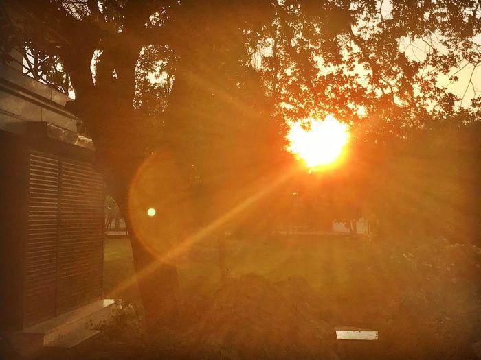 Lens Flare Sun Sunlight Sunbeam No People Nature Outdoors Sunset