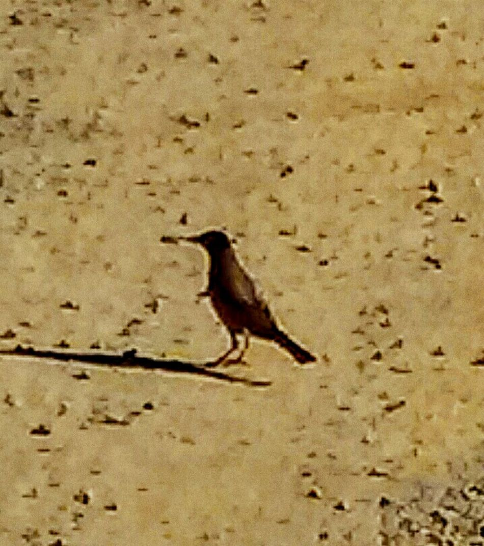 Bird Photography Chirpchirp Earlybirdlove Early Bird Gets The Worm Quack?