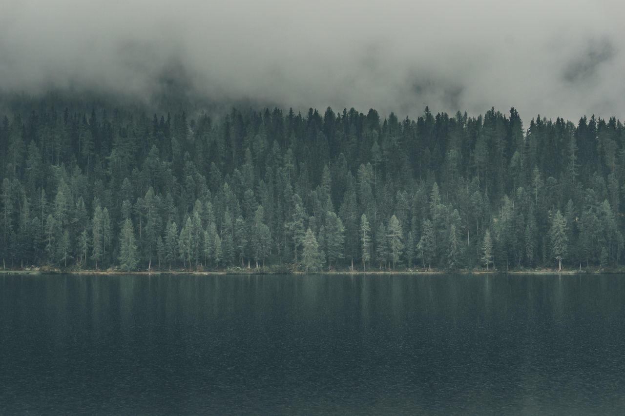 A moody and cloudy day at the lake in front of the forest in St. Moritz, Switzerland Cloud Cloudy Day Dark Mood Dark Sky Fog Foggy Lake Folk Forest Green Forest Lake Light And Shadow Moody Moody Sky Moody Weather Nature Nature Pine Trees Scenics St. Moritz Swiss Switzerland Tranquil Scene Tree Trees Wallpaper