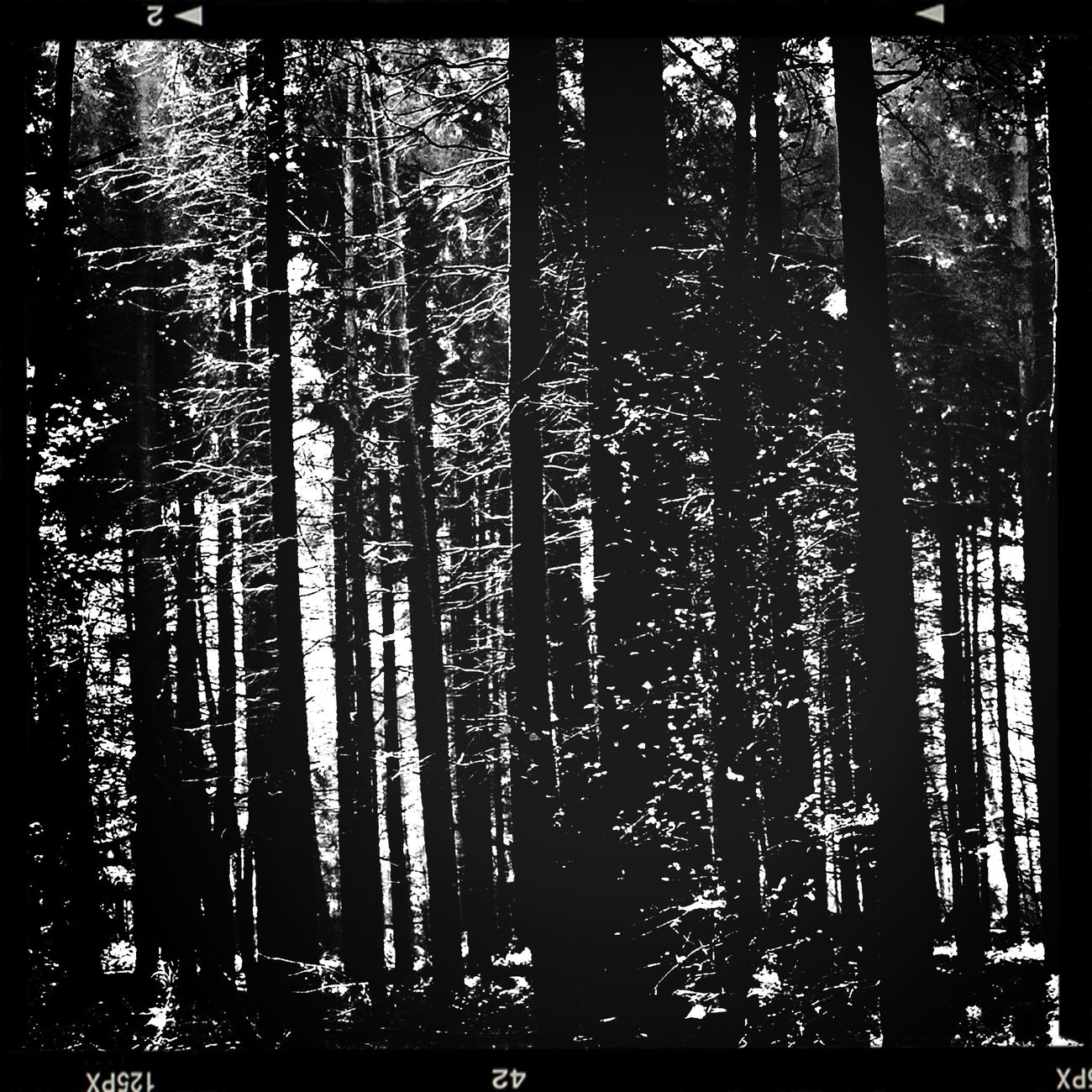 Hiking today, the deserted forest welcomes us. Monochrome Monochrome_Monday Monochrome_Monday