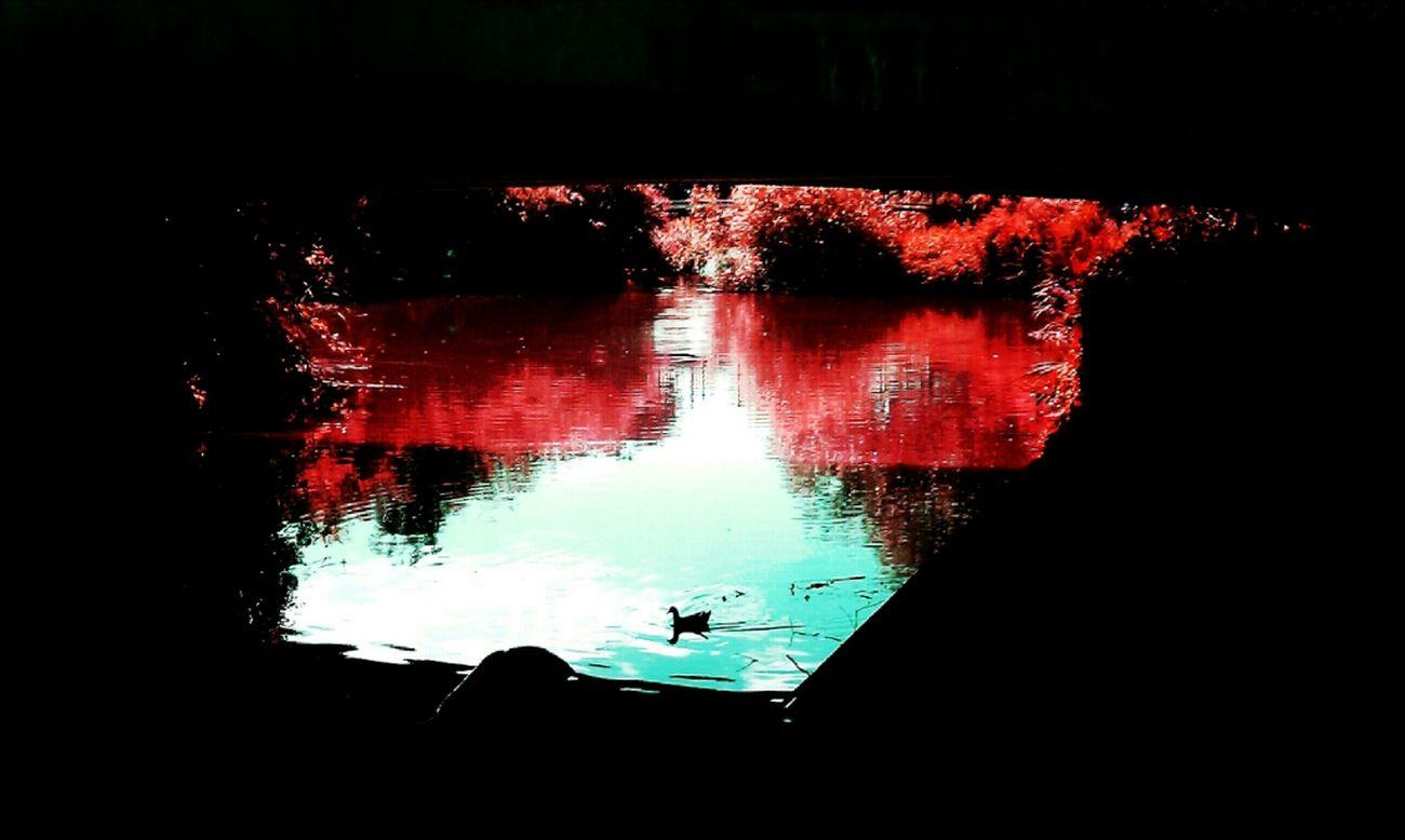Duck Under The Bridge