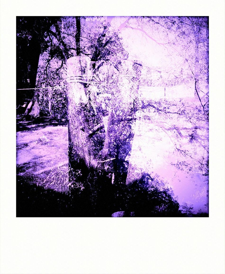 Misplacedshapes Trees