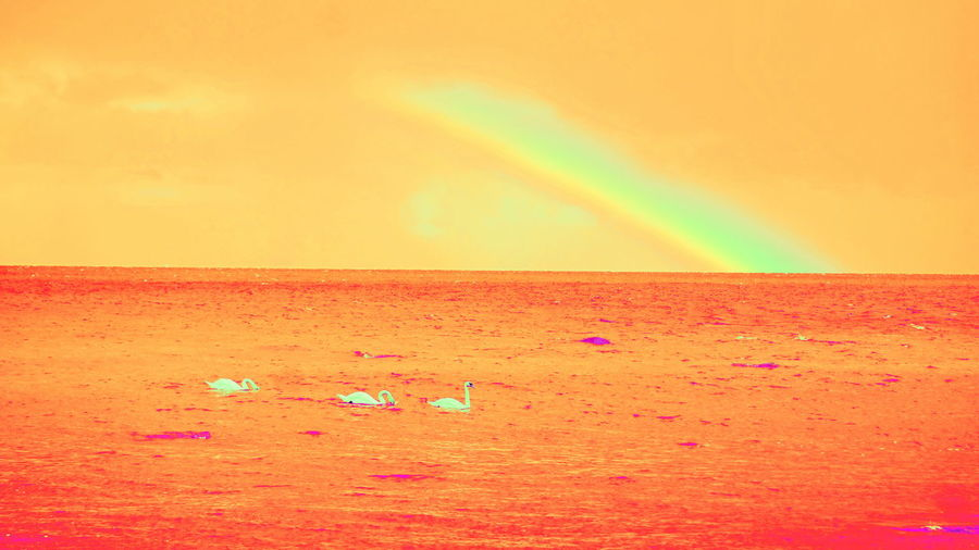 Abnormal Color Collection Atmospheric Mood Horizon Over Water Idyllic Life On Mars Orange Sky Rainbow Sea Swans Tranquility Water