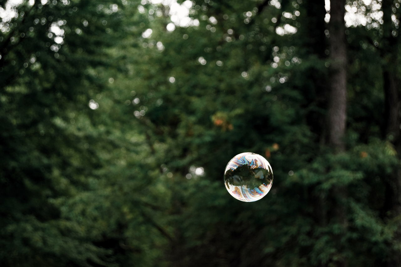 Bubbles The Woods Bubbles In The Woods Fine Art Photography Showcase July Pivotal Ideas Eyeemphoto TakeoverContrast Dramatic Angles capturing motion Maximum Closeness Focus Object My Year My View Handmade For You Uniqueness Long Goodbye The Secret Spaces Art Is Everywhere ミーノー!! Break The Mold BYOPaper! Live For The Story Sommergefühle