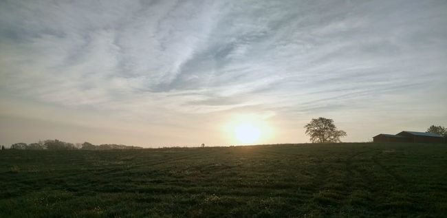 Tree Nature Beauty In Nature Growth Sunset Landscape Agriculture Field Sky Tranquil Scene Scenics Rural Scene Cloud - Sky Social Issues No People Tranquility Outdoors Plant Day