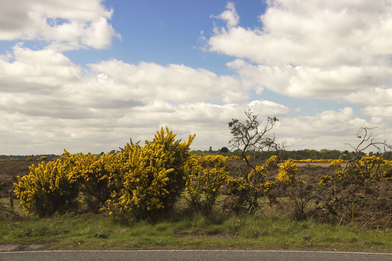 Beauty In Nature Cloud - Sky Day Field Growth Landscape Nature No People Outdoors Roadtrip Rural Scene Scenics Sky Tranquil Scene Tranquility Tree Yellow Yellow Flower