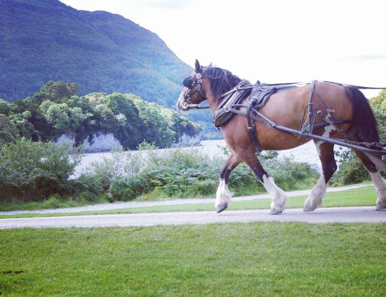 Horse Photography  Horse Trotting By The Lake Lake Views Green Countryside Cloudy Day Side View Trotting By Horse And Carriage Tourist Attraction  Killarney  Killarney National Park Ireland South Ireland Outdoors Walking Around The Grounds Saddle Capturing The Moment