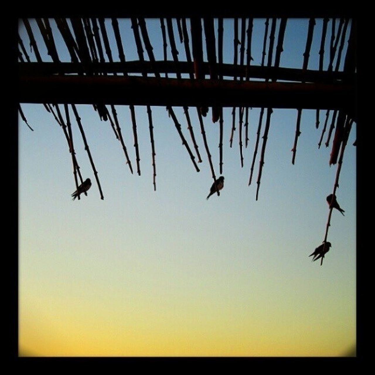 Silhouette Of Birds Perching On Thatched Roof