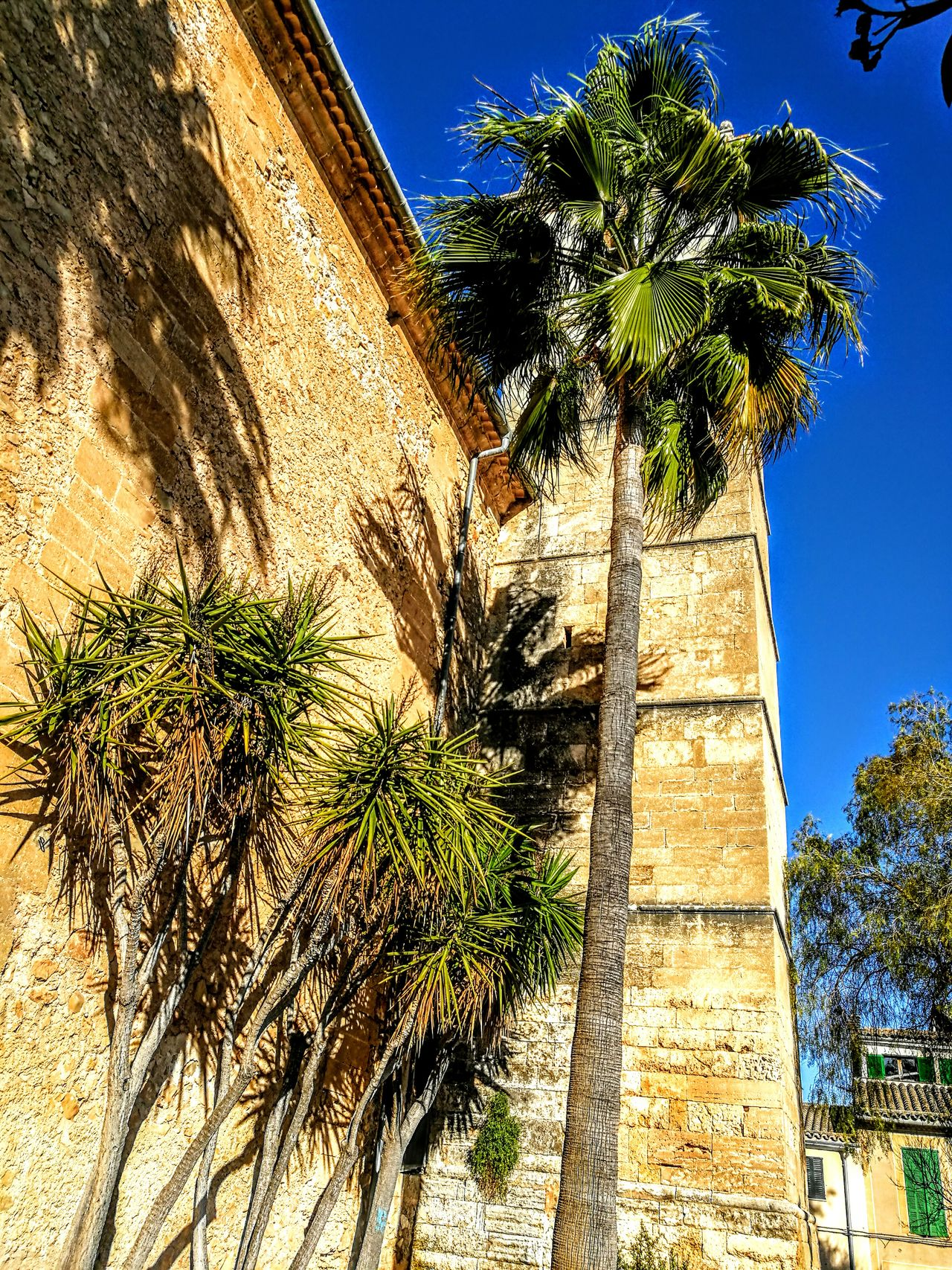 Trees at Sant Barbara Church in Vilafranca... Tree Growth Built Structure Palm Tree Shadow Low Angle View Sunlight Outdoors Architecture Clear Sky Nature Day Sky Building Exterior Idyllic Tranquil Scene Originalpicture Nostalgic Scene GetbetterwithAlex PalmaDiMaiorca