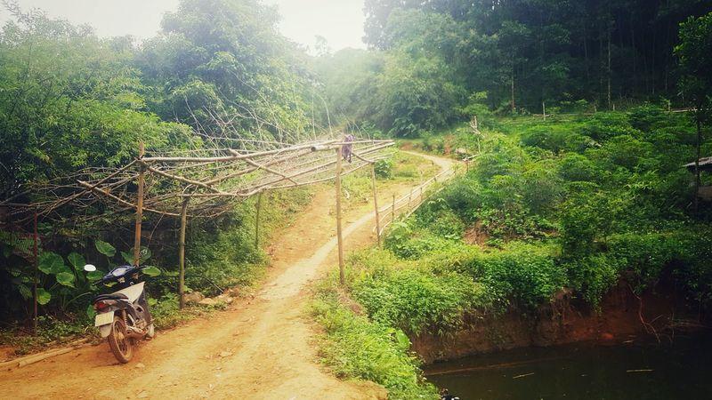 Yên Sơn, Ba Vì, Hà Nội Beauty In Nature Nature Freshness Galaxys6 Contryside Green Green Green!  Travel Bavi Outdoors Hà Nội