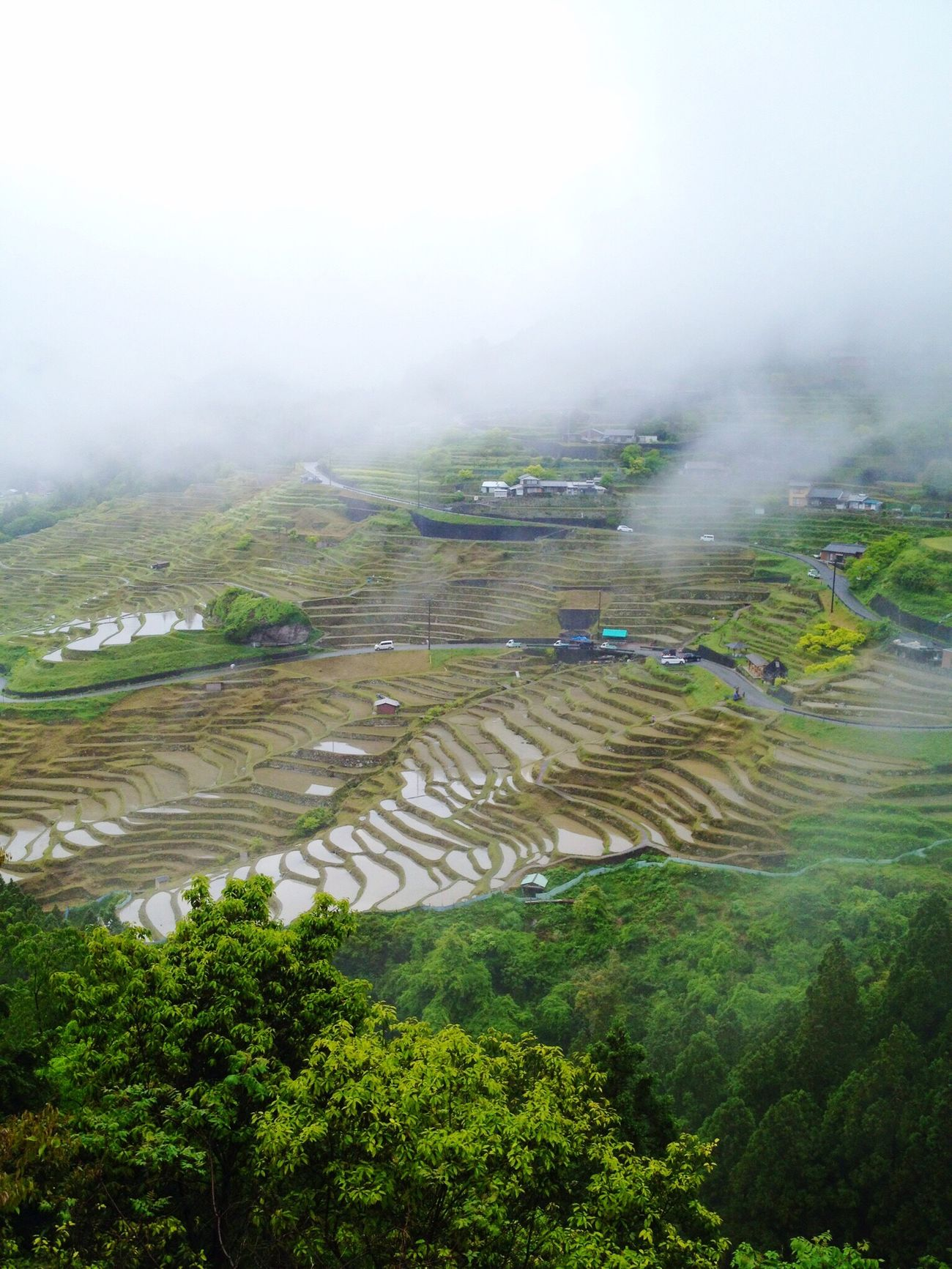 Agriculture Scenics Landscape Beauty In Nature Timescape TranquilityyTranquil SceneeFielddTerraced FielddNatureeOutdoorssRice - Cereal PlanttHigh Angle ViewwRice PaddyyNo Peoplee SkyyDayy