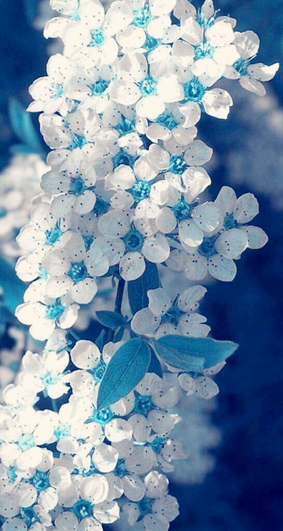 Hello World Nature_collection Beautiful Sweet Colors Of Nature