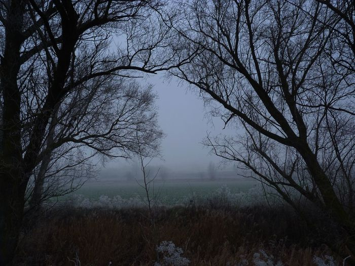 Día de niebla 02 Day Fog Fog Day Frosty Mornings Landscape Nature No People Outdoors Tree