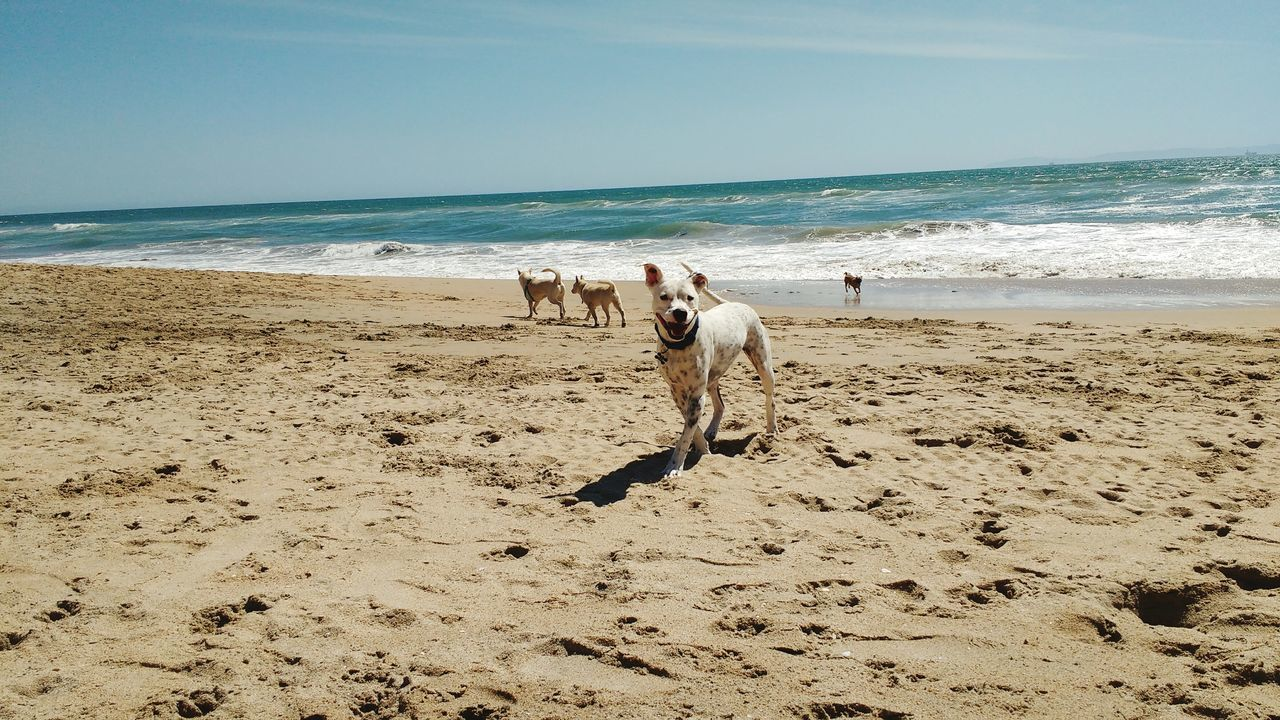 Huntingtonbeach Southern California California Dogbeach Dogs Dog Beach Ocean Sand Waves Sky Whitedog