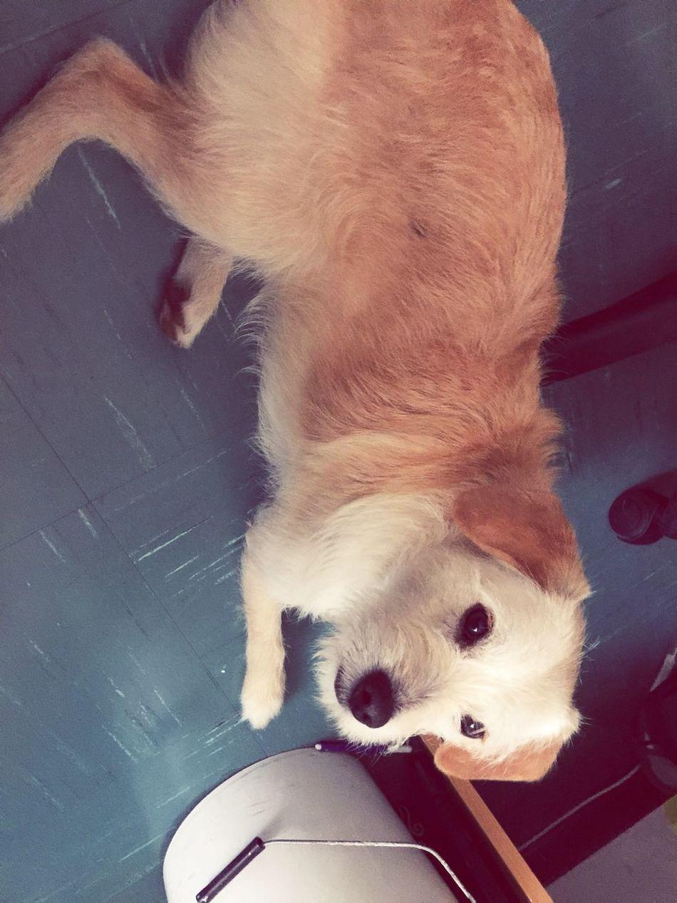 My dog ❤️ Dog Love You