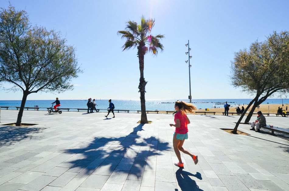 Beautiful stock photos of palm tree,  Barcelona,  Day,  Growth,  Horizon Over Water