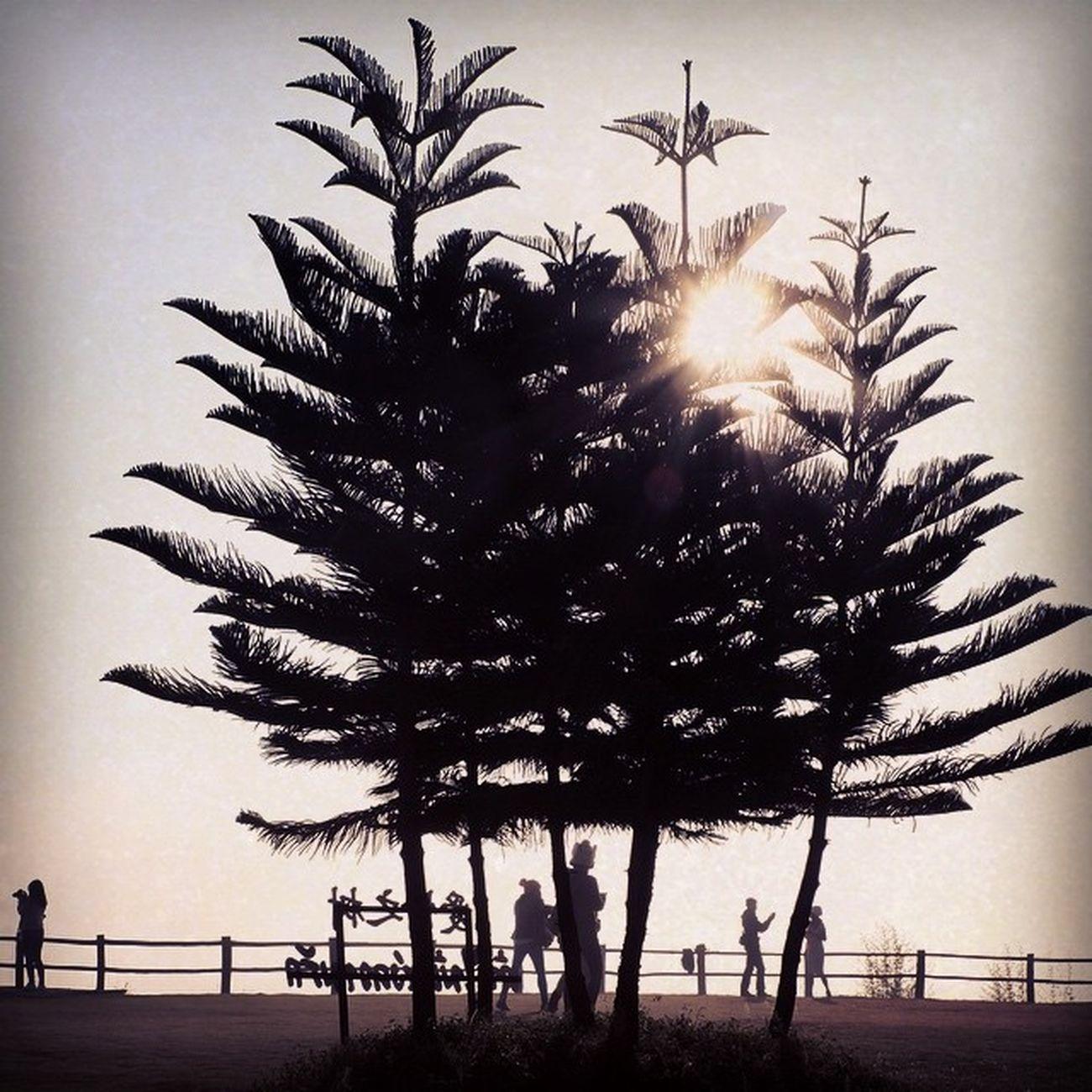 ต้นไม้แห่งความรัก...🌳 ถ้าฉันเจอรักแท้...🌳 ฉันจะพามาแนะนำให้เธอได้รู้จัก...🌳 . . การเดินทางประจำปี . . Saturday 20 December 2014 . . Myx100