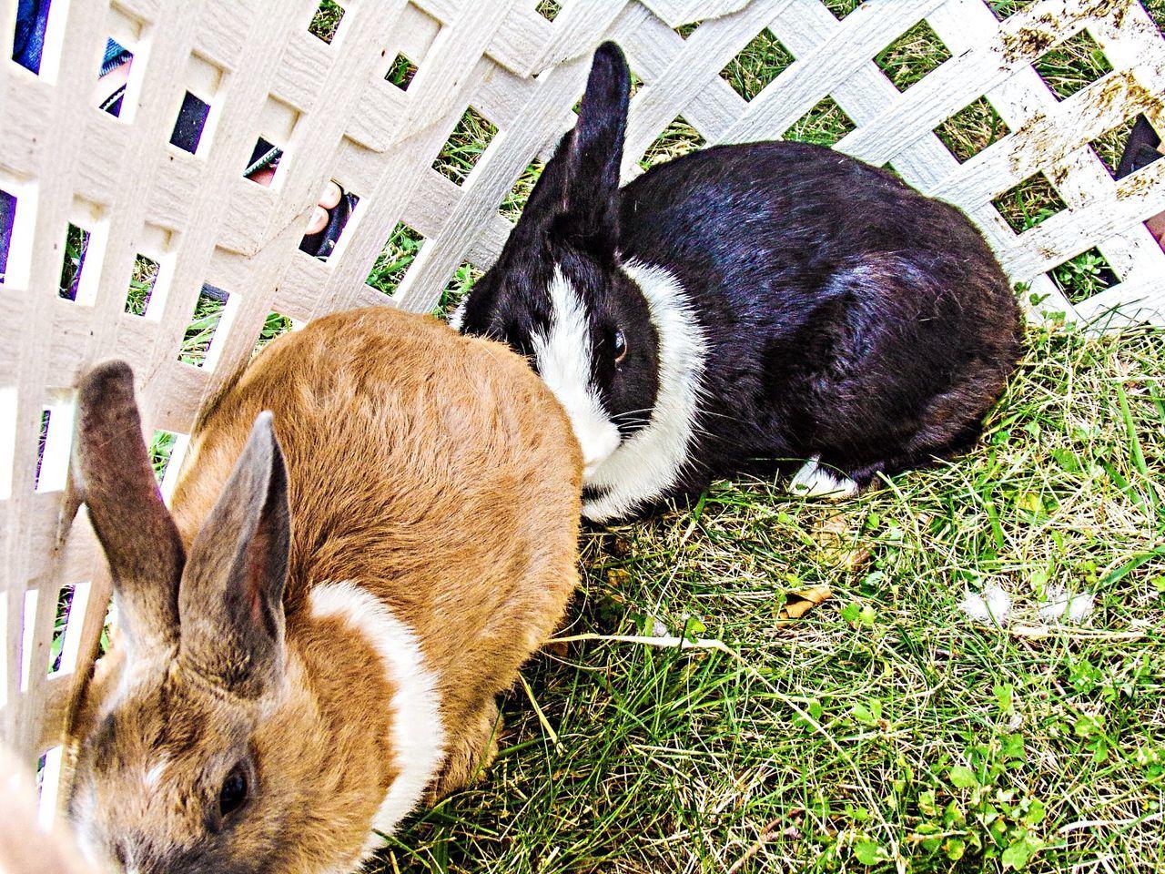 Beautiful stock photos of rabbit, Animal Themes, Captivity, Close-Up, Day