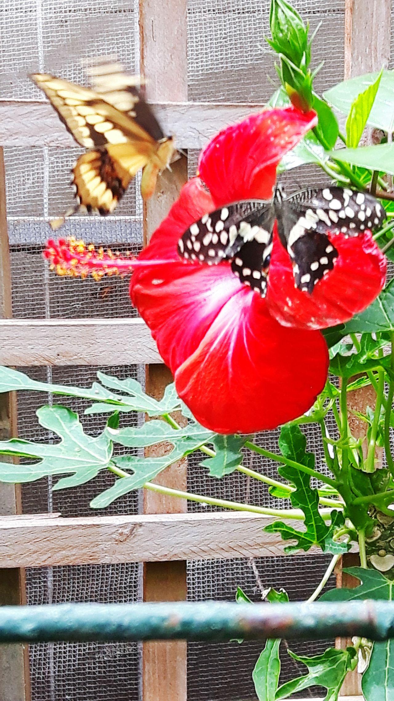 Actionshot Butterflyfarm Butterfly Cornwall