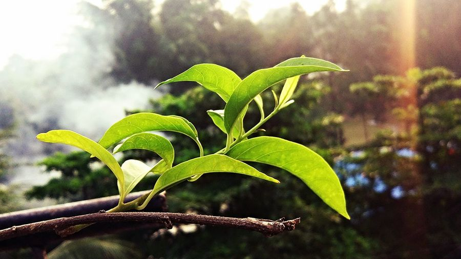 Leaf Green Color Nature No People Tree Beauty In Nature Sky Freshness Day