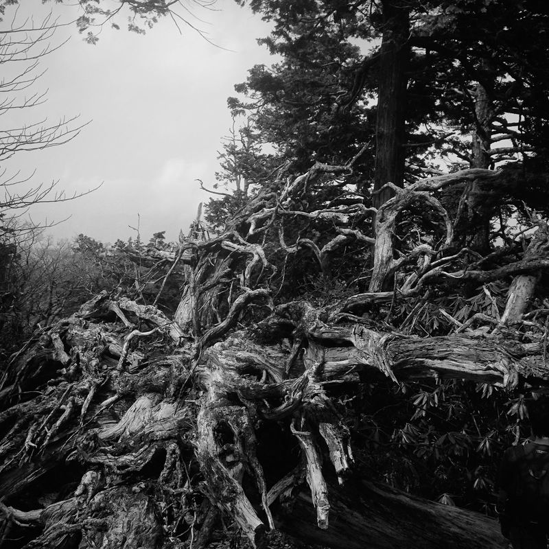 Mountain Hiking EyeEm Nature Lover Nature_collection Iphonephotography Hyking Nara,Japan 大台ケ原 Landscape Monochrome
