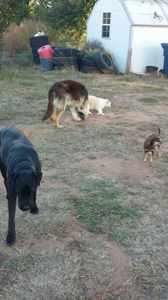Boots N Jeans Gal💝 Oklahoma My Running Buds🐕🐈 Check This Out Enjoying Life Outdoors Living On A Farm Random Photo Time Best Years Of Life Check This Out Eyeem Best Photos EyeEm Best Shots Hanging Out Hello World Perspective Simplicity Composition Taking Photos EyeEm Nature Lover Sic 'em