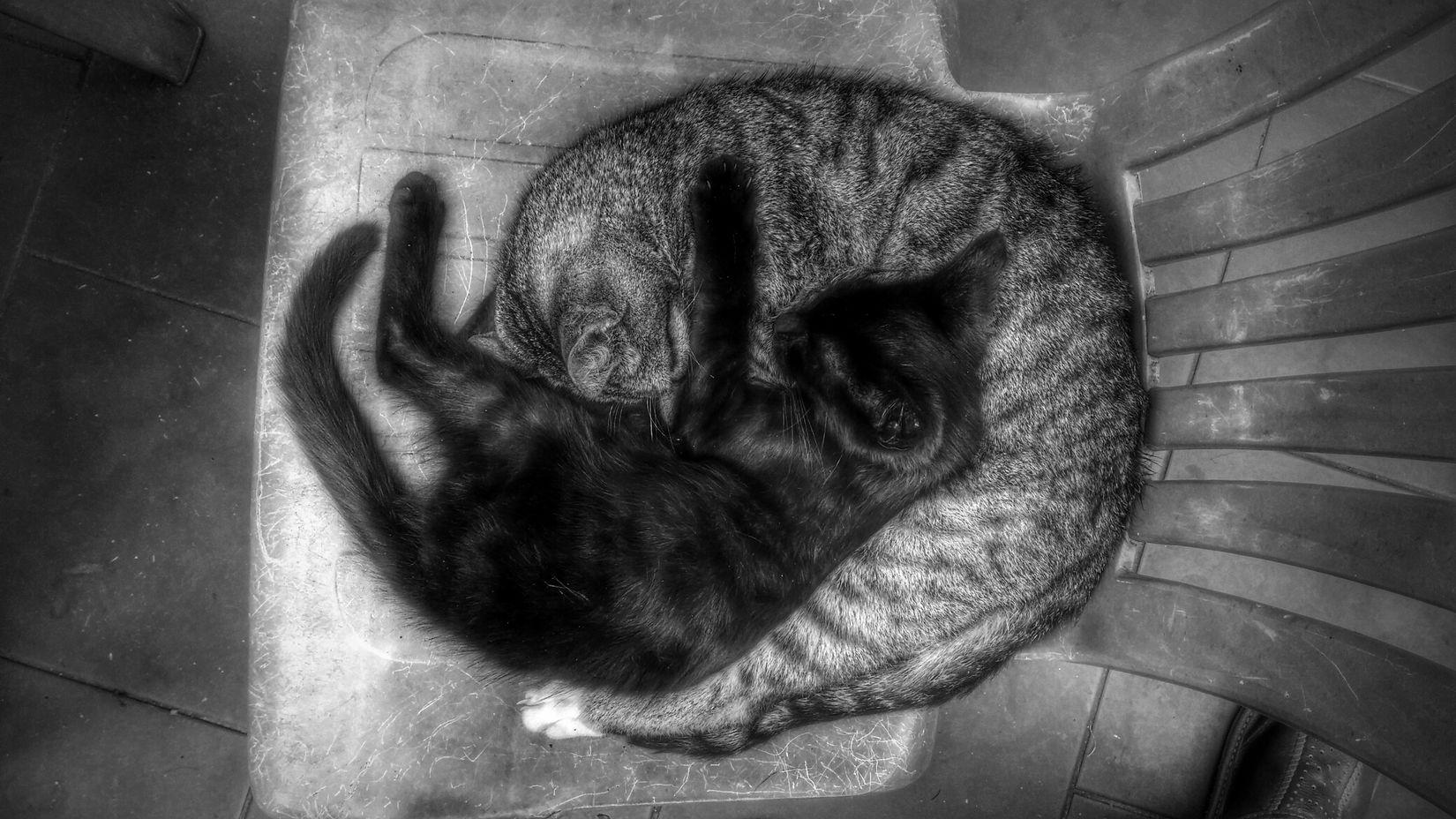 Monochrome Cats Love