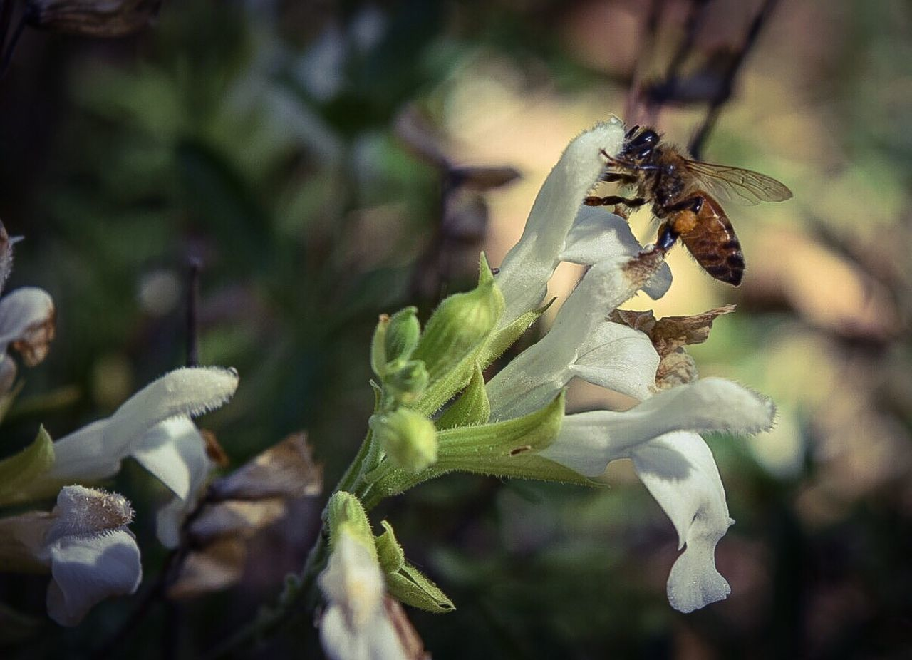 Close-Up Of Honey Bee On Bunch On Flowers