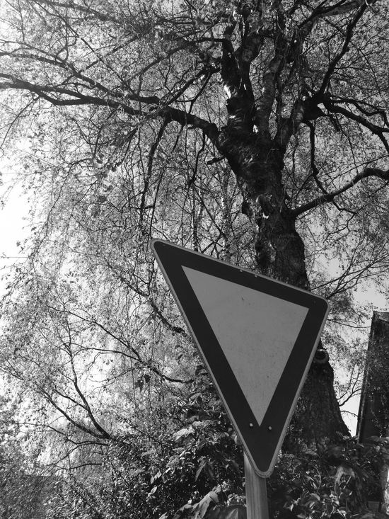 Bare Tree Beauty In Nature Branch Close-up Day Growth Low Angle View Nature No People Outdoors Road Sign Sky Tree