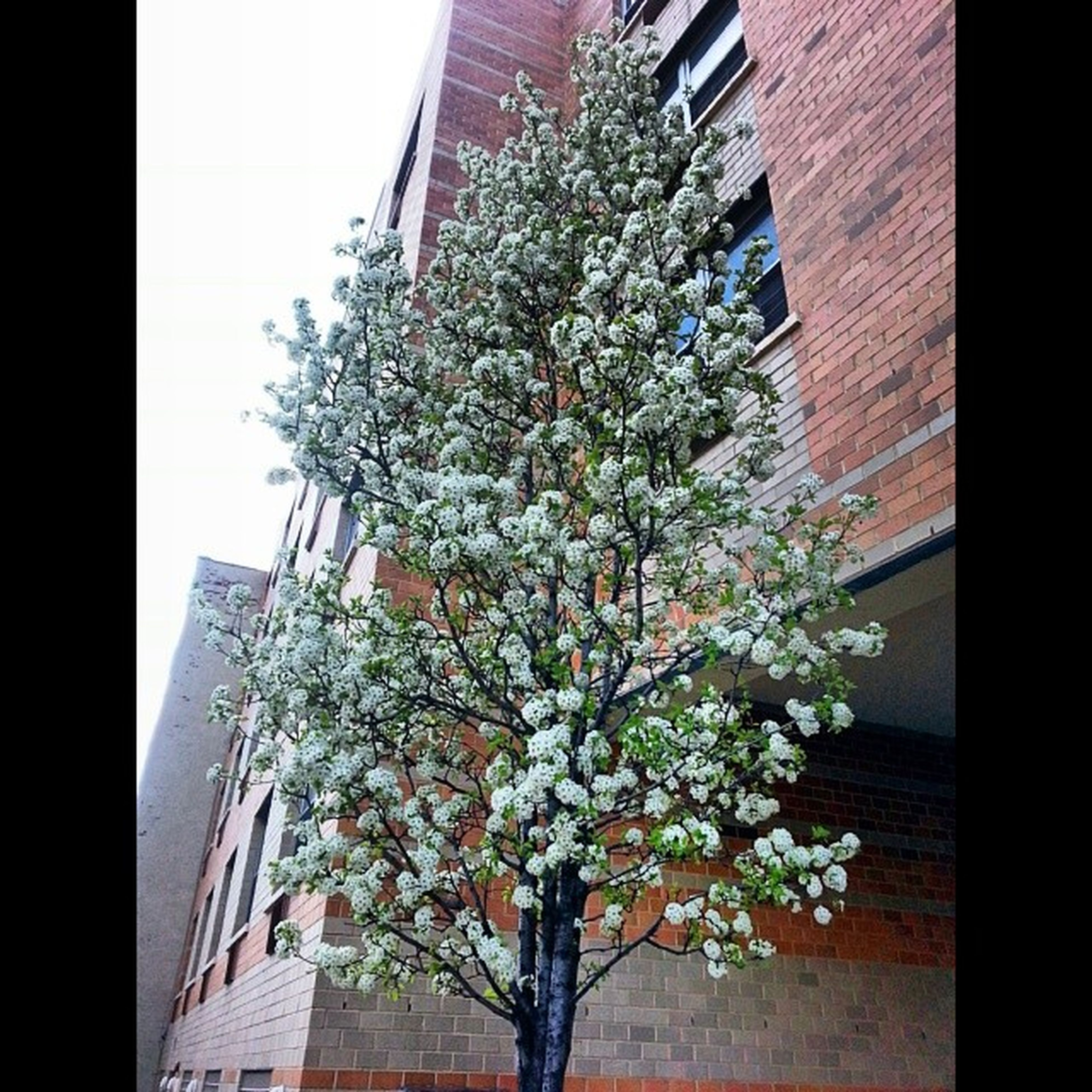 building exterior, architecture, flower, low angle view, built structure, growth, tree, branch, freshness, clear sky, nature, house, blossom, fragility, sky, residential building, day, no people, outdoors, residential structure