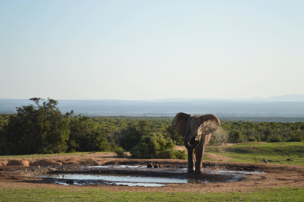 African Elephant In Pond At Addo Elephant National Park