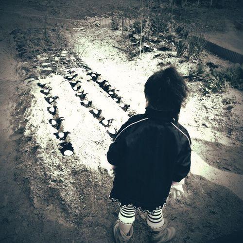 芋植え 畑 自家栽培 Homegrown Farm Children EyeEm Nature Lover Blackandwhite Monochrome