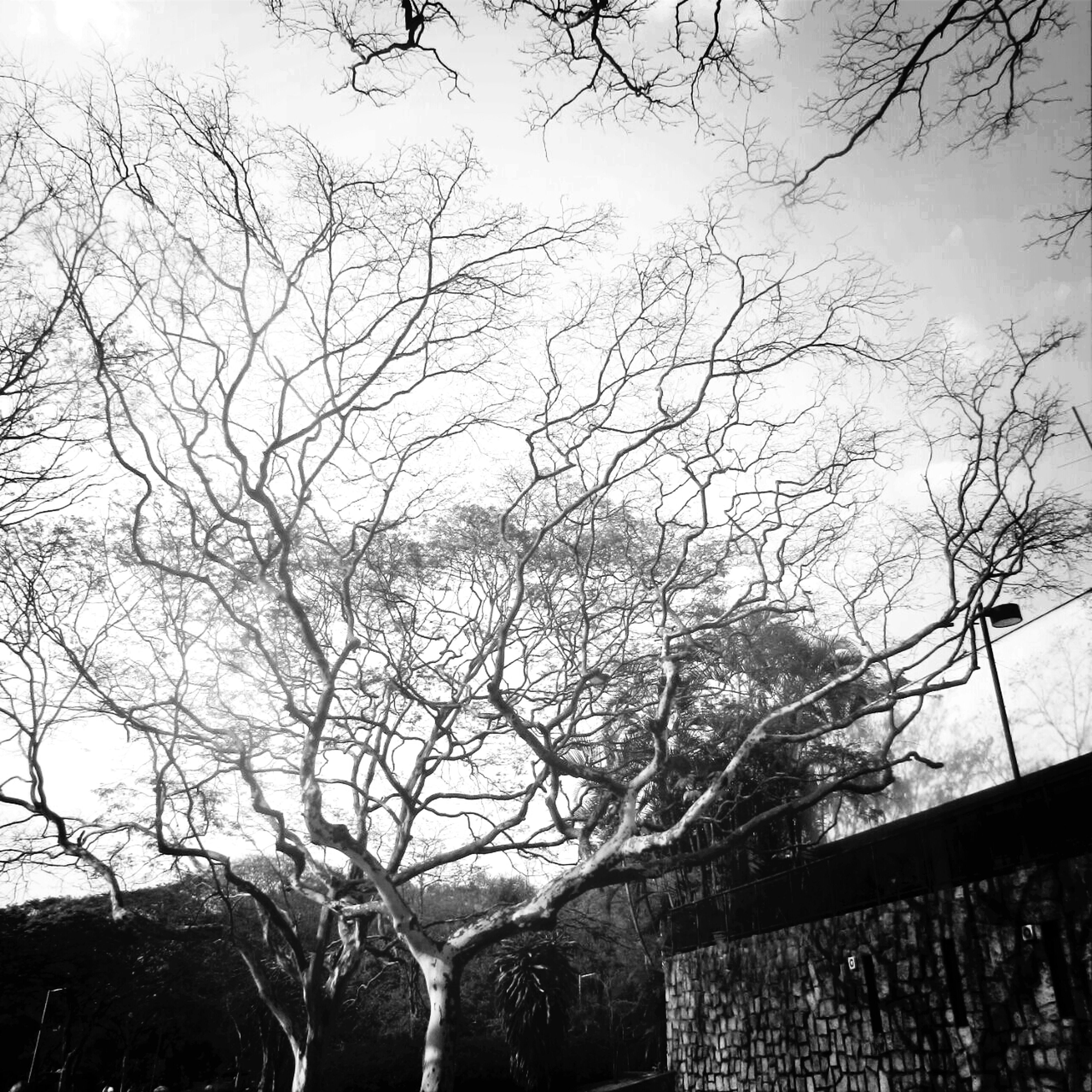bare tree, tree, branch, low angle view, sky, nature, tranquility, winter, built structure, beauty in nature, scenics, weather, architecture, building exterior, tranquil scene, outdoors, cold temperature, no people, season, day