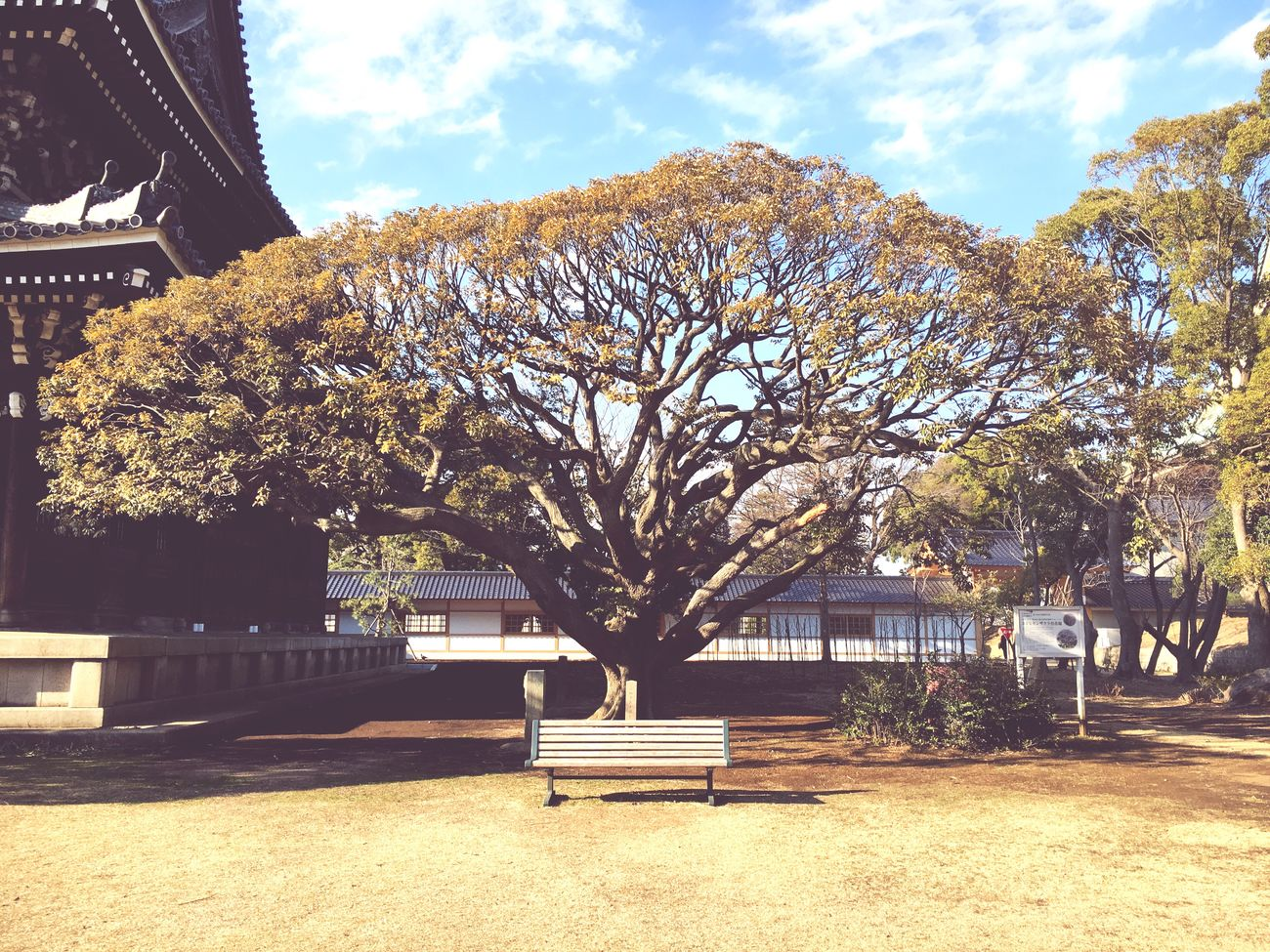 Trees Bench
