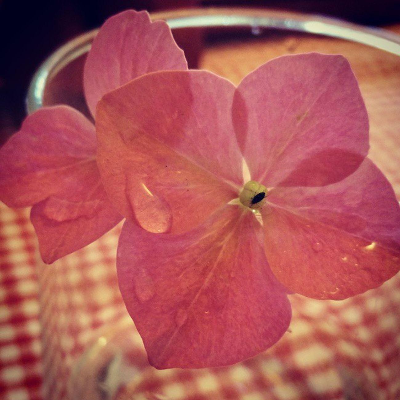 PrettyPetals from mum's mini Flower Garden