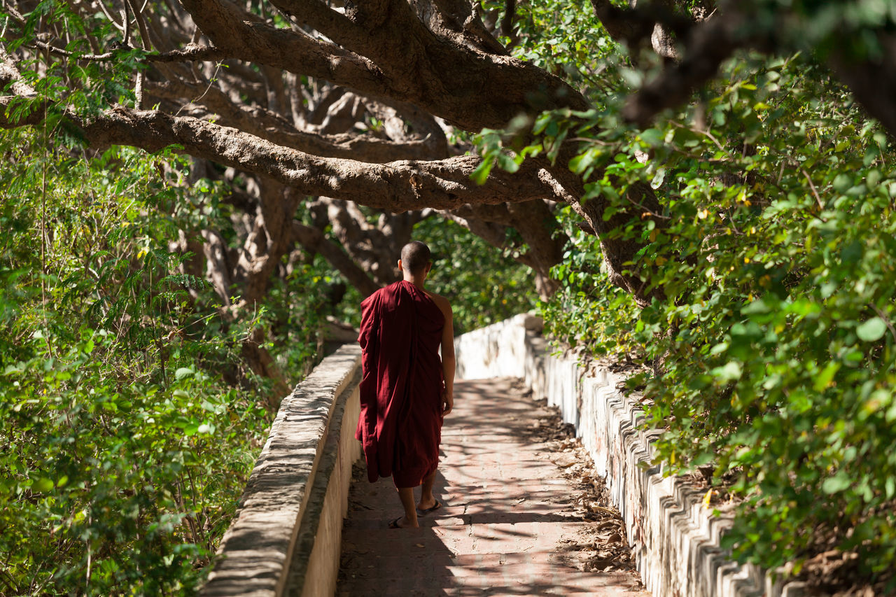 Rear view of a young Buddhist monk walk through the walk way among the forest. Burma Mandalay Monk  Myanmar Peace People Quiet Rear View Red South East Asia Walk Wanderlust