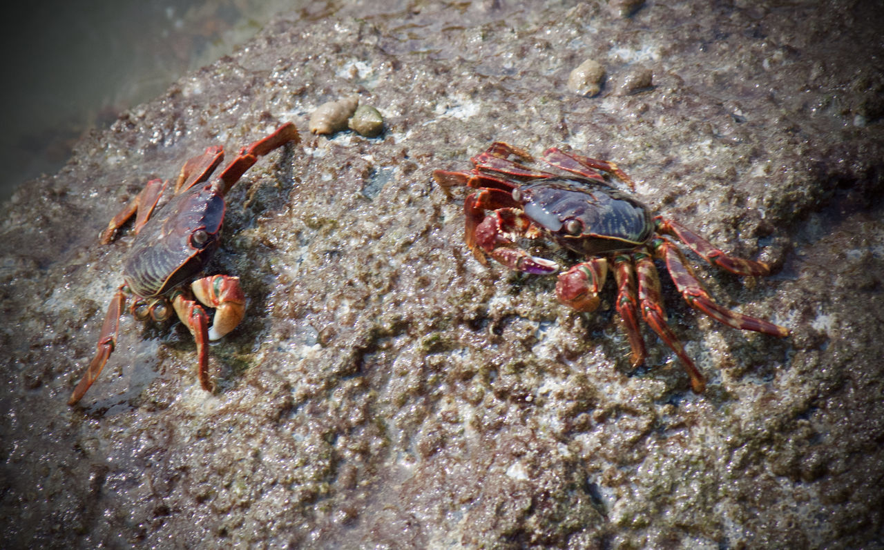 Crab on the rock ... Animal Themes Animal Wildlife Animals In The Wild Beach Beauty In Nature Close-up Crab Crustacean Detail Hermit Crab High Angle View Legs Natural Beauty Nature On The Rocks Outdoors Pair Red Red Crab Rock Scenery Scenics Tranquility Water Wet