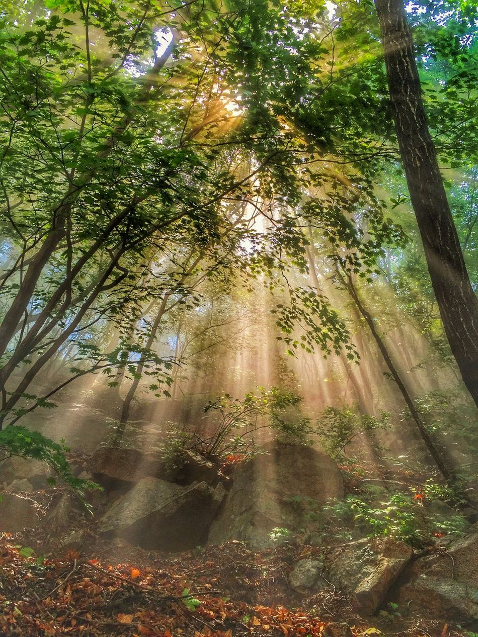 Forest Eye For Photography Sunshine