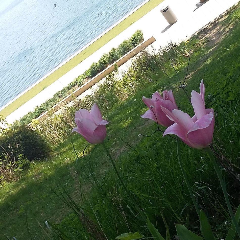 Flowers Sea Wiese  Nature Badsegeberg Grosser Segebergersee