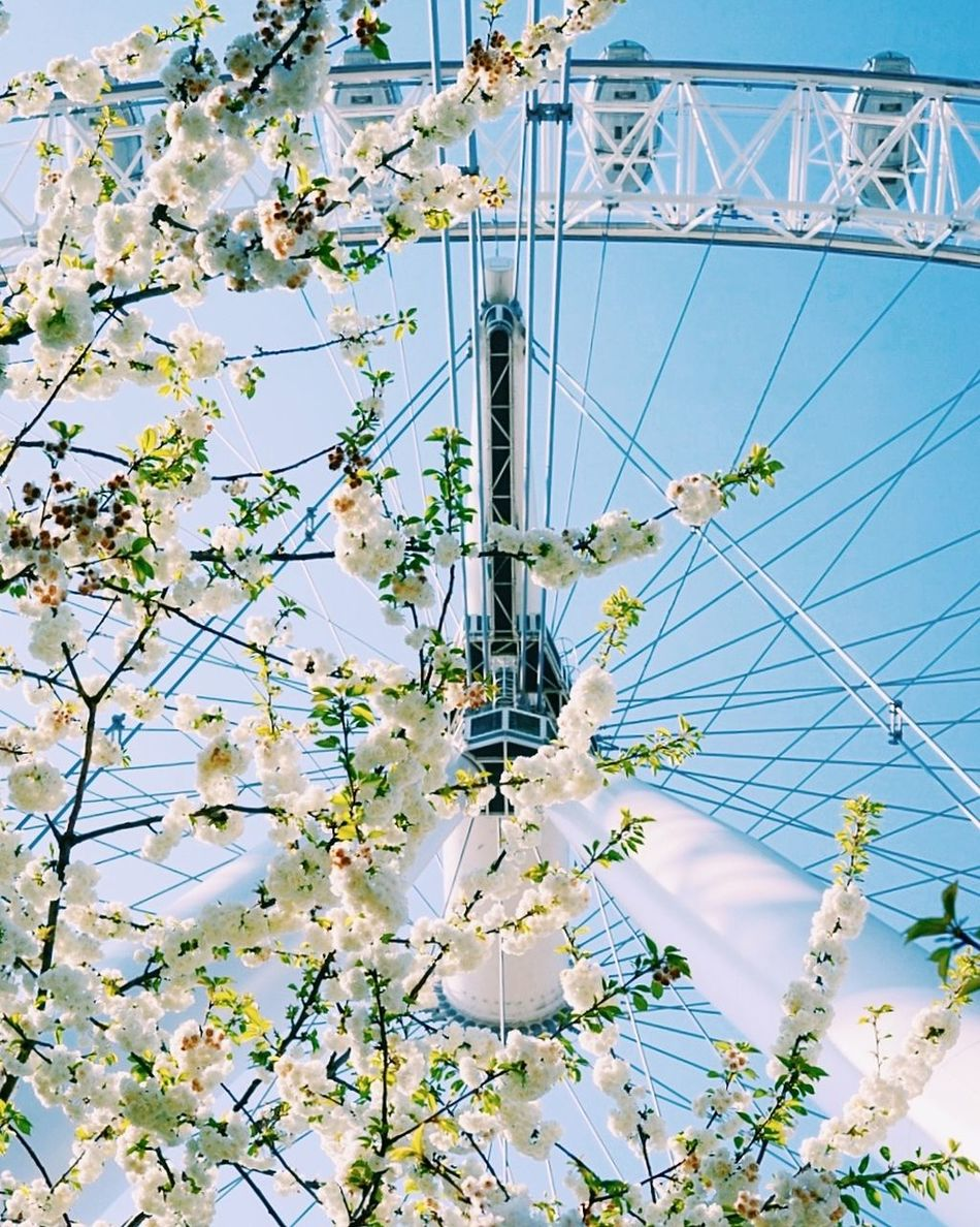 Man vs Nature London LondonEye Blossoming Tree Blossom Manvsnature  Spring Symetry