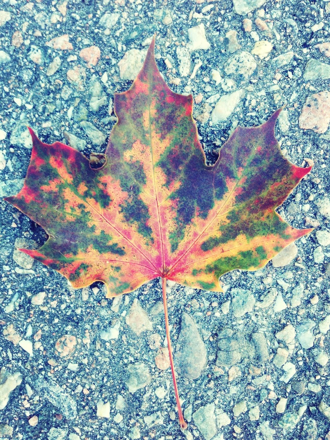 autum is here